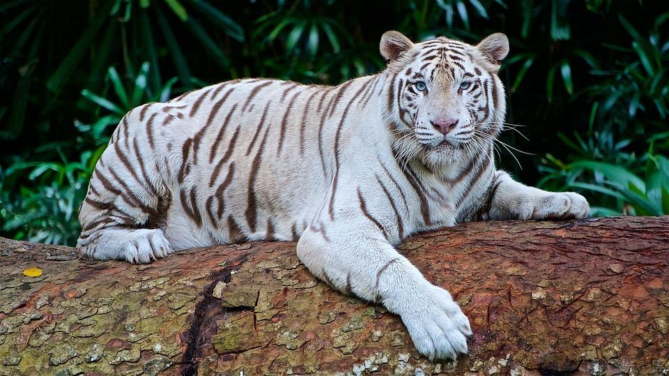 15 espèces d'animaux en voie d'extinction dans le monde