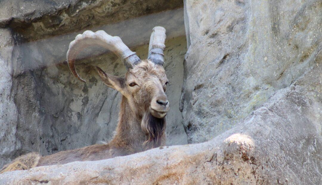 Les 7 espèces d'animaux en voie de disparition en France