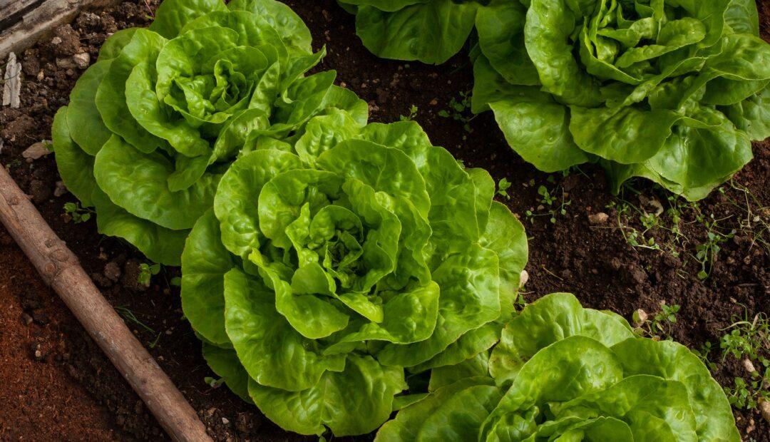 De quoi avez-vous besoin pour aménager un jardin potager ?
