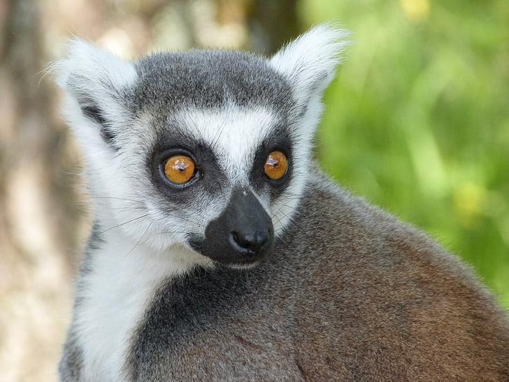 Quelles sont les espèces menacées par la déforestation?